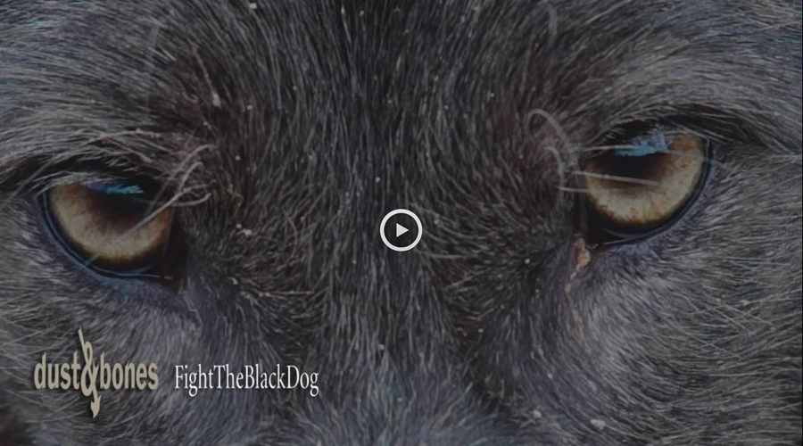 Dust & Bones | Fight The Black Dog (Video)