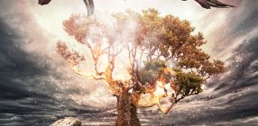 Visionatica | Enigma Fire